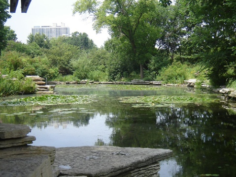 Alfred Caldwell's Lily Pond in Lincoln Park